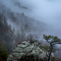 trees through the fog, Linville Gorge, NC